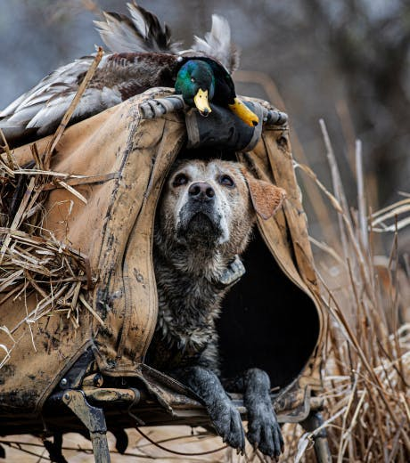 Shop Ducks Unlimited
